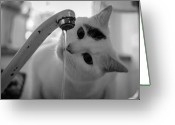 Black And White Cat Greeting Cards - Cat Drinking Water From Faucet Greeting Card by A*k