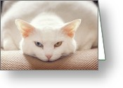Staring Greeting Cards - Cat Expression Greeting Card by Kathryn Froilan