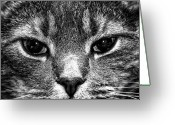 Black And White Cat Greeting Cards - Cat Face In Black And White Greeting Card by Paul Frederiksen, Jr.