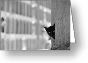 Black And White Cat Greeting Cards - Cat In Cemetery Greeting Card by All copyrights reserved by Harris Hui