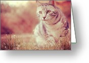 Animal Portrait Greeting Cards - Cat In Grass Greeting Card by Alberto Cassani