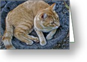 Animals Greeting Cards - Cat In The Bath Greeting Card by Gwyn Newcombe