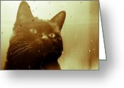 Black Cat Greeting Cards - Cat in the window Greeting Card by Bob Orsillo