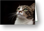 Green Eyes Greeting Cards - Cat  Looking  Upward Greeting Card by Monica Fecke