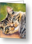 Gray Tabby Greeting Cards - Cat Nap Greeting Card by Bonnie Rinier