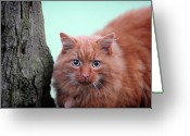 Camera Greeting Cards - Cat Near Bark Of Tree Greeting Card by Peak District Online .co.uk