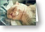 Cat Eyes Greeting Cards - Cat Sleeping Comfortably Greeting Card by Jimmy LL Tsang