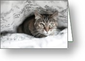 Inside Of Greeting Cards - Cat Under In Blankets Greeting Card by Image taken by Mayte Torres