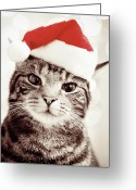 Animal Head Greeting Cards - Cat Wearing Christmas Hat Greeting Card by Michelle McMahon