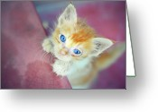 Indoors Greeting Cards - Cat With Blue Eye Greeting Card by Chandan Mitra