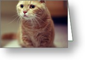Staring Greeting Cards - Cat With Inquisitive Look Greeting Card by LeoCH Studio