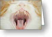 Teeth Greeting Cards - Cat Yawing Greeting Card by Nadiamonteiro
