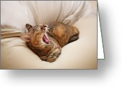 Laziness Greeting Cards - Cat Yawn On Bed Greeting Card by Junku