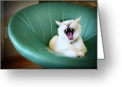 Laziness Greeting Cards - Cat Yawning In A Vintage Blue Green Chair Greeting Card by Carrie Anne Castillo