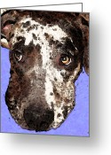 Rescue Animal Greeting Cards - Catahoula Leopard Dog - Soulful Eyes Greeting Card by Sharon Cummings