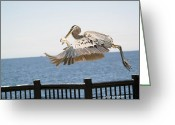 Birdseye Greeting Cards - Catch of the Day Greeting Card by Karen Devonne Douglas