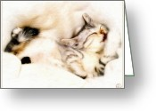 Slumber Greeting Cards - Catnap Greeting Card by Gun Legler