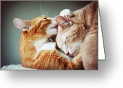 Indoors Photo Greeting Cards - Cats Embrace Greeting Card by Image(s) by Sara Lynn Paige