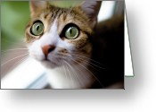 Green Eyes Greeting Cards - Cats Eyes Greeting Card by Emmanuelle Brisson