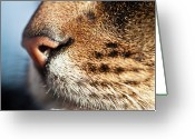 Animal Themes Greeting Cards - Cats Whiskers Greeting Card by Sally Anscombe
