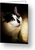 Playful Kitten Greeting Cards - Catsablanca Greeting Card by Jeremy Martel