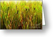 Willows Digital Art Greeting Cards - Cattails 2 Greeting Card by Cristopher