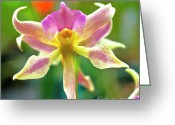 Red Orchid Blooms Greeting Cards - Caucaea rhodosticta orchid Greeting Card by Heiko Koehrer-Wagner