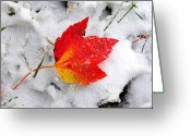 Maple Leaf Greeting Cards - Caught by First Snow Greeting Card by Alan Lenk