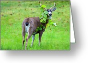 Antlers Greeting Cards - Caught in the Act Greeting Card by Mike  Dawson