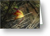 Fallen Leaf Greeting Cards - Caught In The Wind Greeting Card by Donna Blackhall