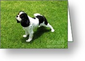 Spaniel Print Greeting Cards - Caviler King Charles Spaniel Greeting Card by L J Oakes