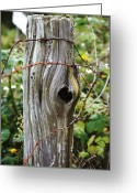Cedar Fence Greeting Cards - Cedar Fence Post Greeting Card by Angi Parks