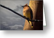 Sunset Greeting Cards - Cedar Waxwing Greeting Card by Bob Orsillo
