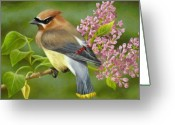 Farm Greeting Cards - Cedar Waxwing on Lilac Greeting Card by Karen Coombes