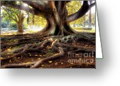 Sunlight Greeting Cards - Centenarian Tree Greeting Card by Carlos Caetano