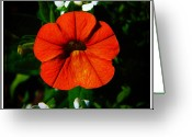 Vinca Flowers Greeting Cards - Center Stage Greeting Card by Leslie Revels Andrews