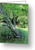 Landscape Framed Prints Greeting Cards - Chairs and the Tree Greeting Card by Kathy Yates