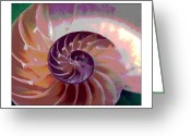 Seashell Art Greeting Cards - Chambers of Evolution Greeting Card by Daniel Goodwin