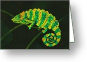 Bright Pastels Greeting Cards - Chameleon Greeting Card by Anastasiya Malakhova