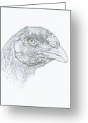 Livestock Drawings Greeting Cards - Champion Malay hen in pencil Greeting Card by Susan Baker