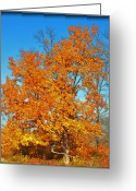Indiana Autumn Greeting Cards - Changing Greeting Card by Brittany H