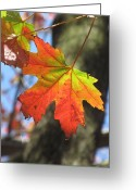 Life In The City Greeting Cards - Changing Colors Greeting Card by Alfred Ng