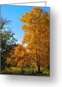 Autumnal Digital Art Greeting Cards - Changing Leaves Greeting Card by Bill Cannon