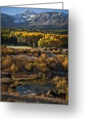 Reflected Tree Greeting Cards - Changing Season Greeting Card by Jeff Kolker