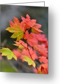 Red Fall Colors Greeting Cards - Changing Seasons Greeting Card by Jennifer Crites