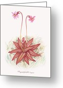Floral Drawings Greeting Cards - Chapmans Butterwort Greeting Card by Scott Bennett