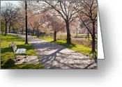 Suffolk County Greeting Cards - Charles River Cherry Trees Greeting Card by Susan Cole Kelly