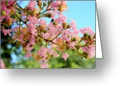 Dana Oliver Greeting Cards - Charleston Blossoms Greeting Card by Dana  Oliver