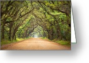 Old Photo Greeting Cards - Charleston SC Edisto Island - Botany Bay Road Greeting Card by Dave Allen