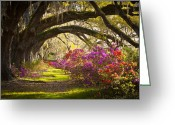 Oak Trees Greeting Cards - Charleston SC Magnolia Plantation Gardens - Memory Lane Greeting Card by Dave Allen